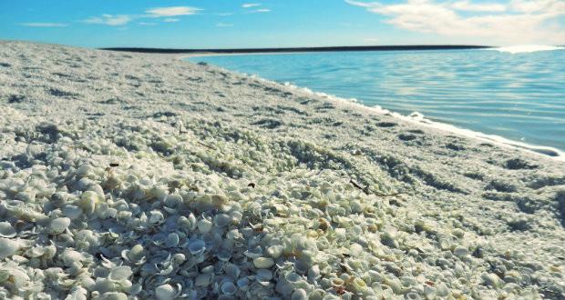 Plaža školjki
